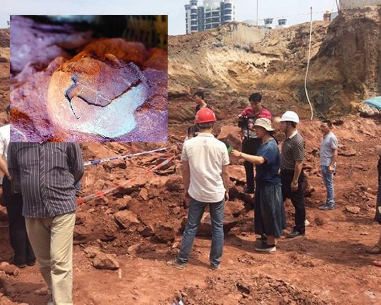 佛山發現7000萬年恐龍蛋化石。網上圖片