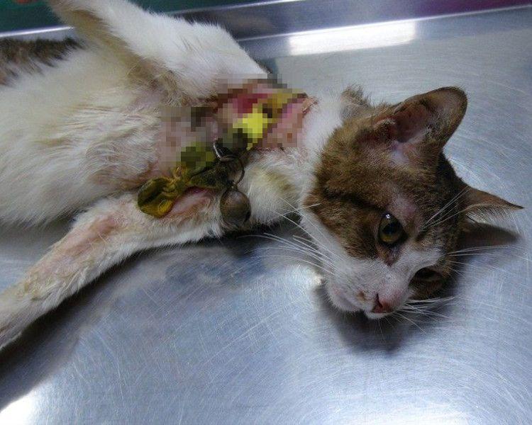 貓咪走失時,而貓咪天性會抓東抓西,很容易移位而把他們勒死。