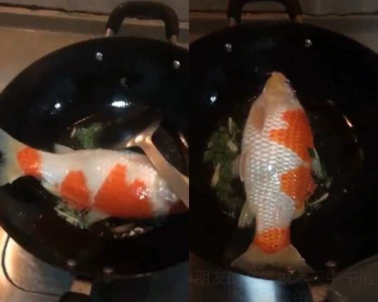 台婦煎錦鯉當午餐。網上圖片