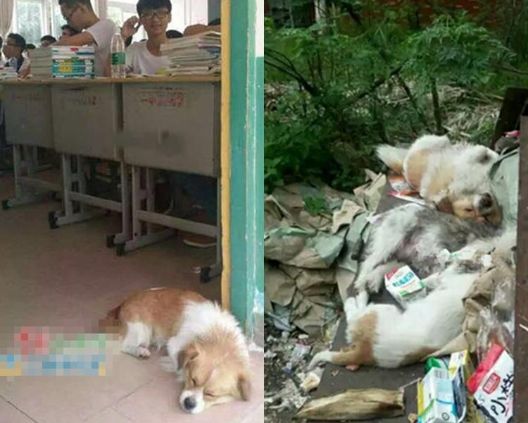 「學霸狗」連同三隻血肉模糊的流浪狗棄在垃圾堆中。