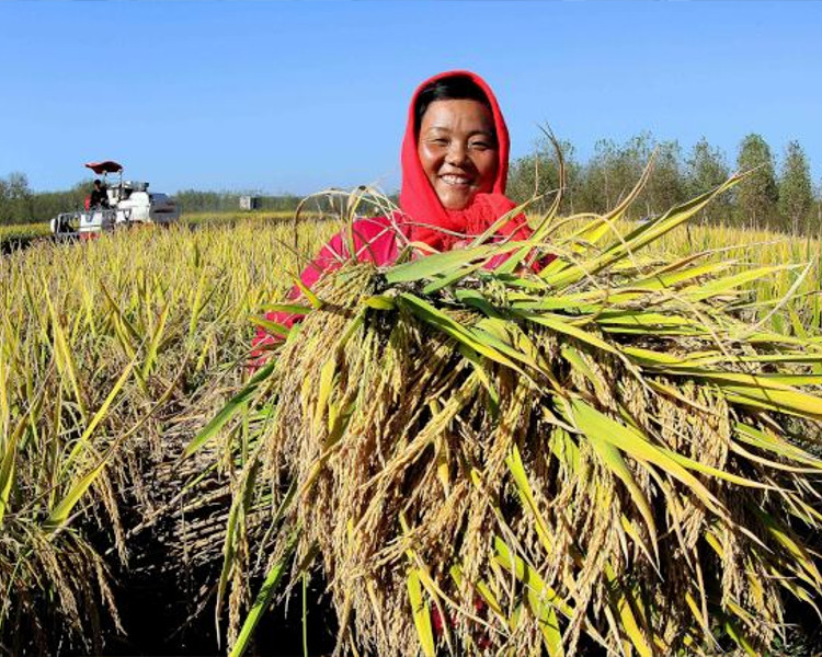 報告指出,近年來隨著中國區域對幫助脫貧力度的不斷加大。