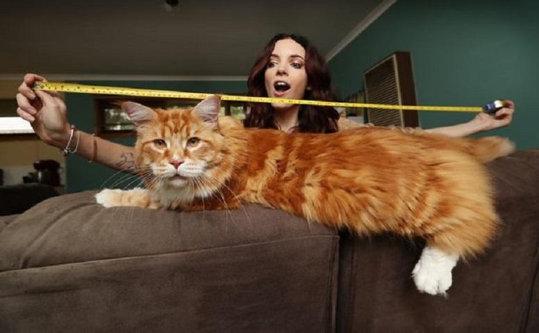 奧馬爾身長120厘米