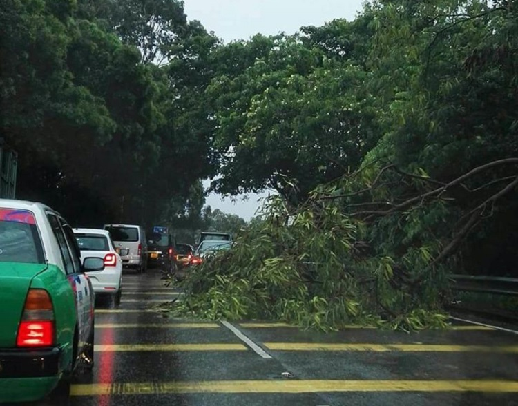 元朗十八鄉塌樹。香港交通突發報料區