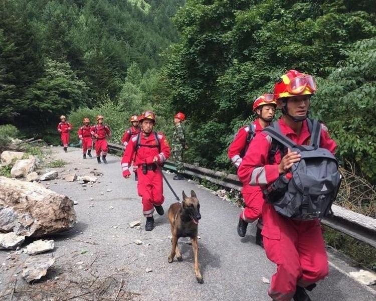救援隊派出多人攜同搜救犬徒步進入熊貓海。