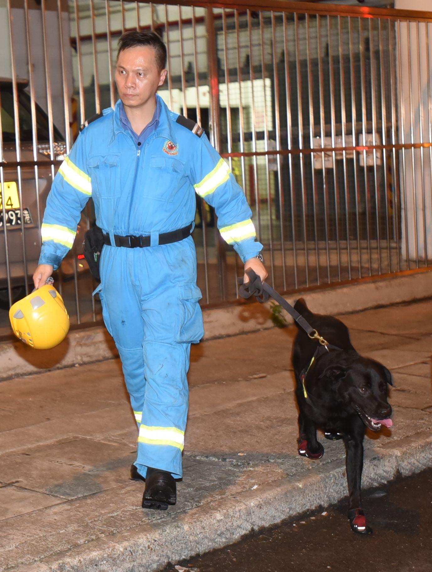 消防犬「安仔」出動協助。尹敬堂攝。