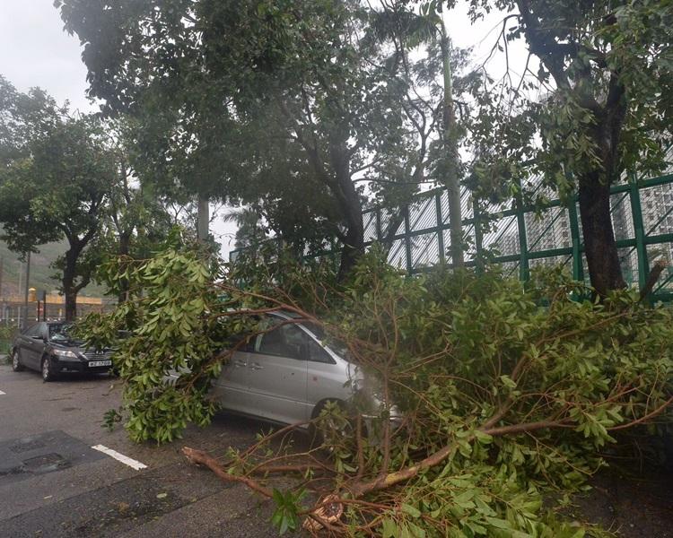 杏花村有大樹倒榻壓著汽車。