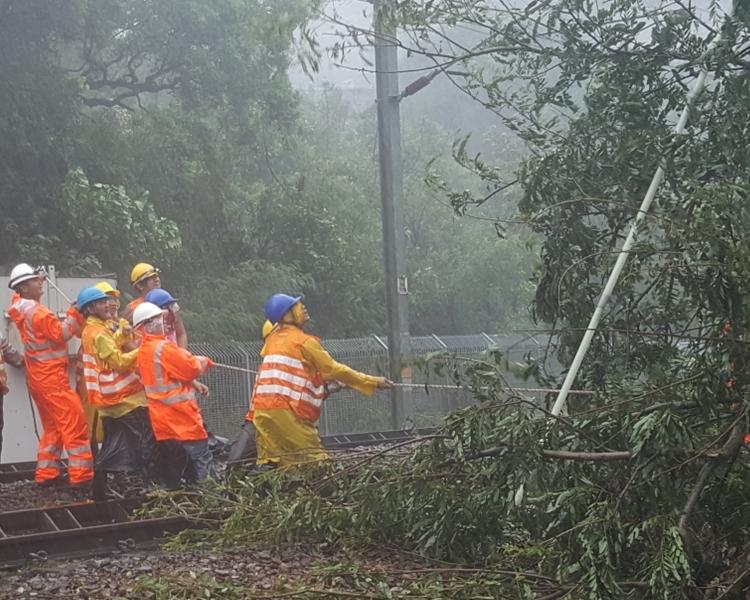 港鐵大學站附近曾有塌樹,職員盡力移走。港鐵提供圖片