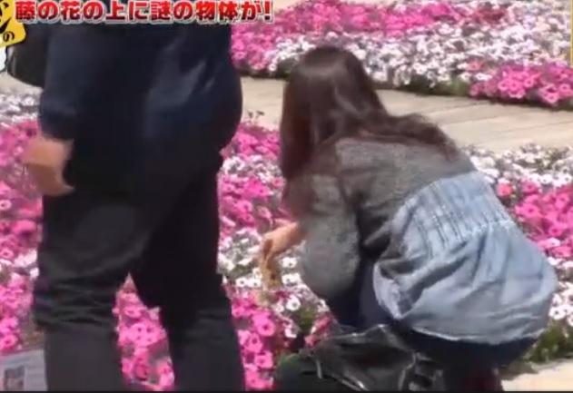 有台灣遊客將東西放在花圃上。網上圖片