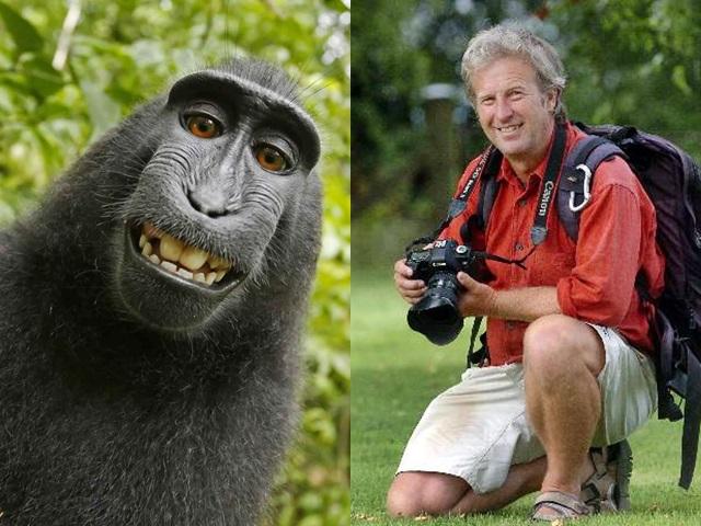 英國攝影師斯萊特,同意將未來照片收益25%,捐給印尼保護黑冠獼猴的慈善機構。