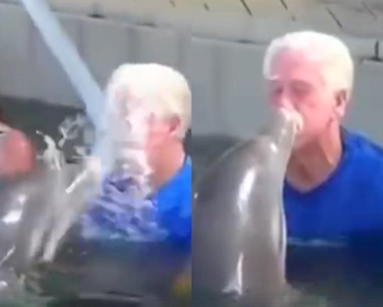 盞鬼海豚向伯伯噴水引大戰。影片截圖