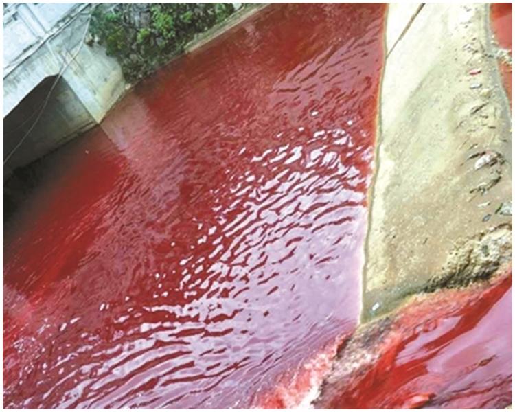 現場為江西濂溪河。網上圖片