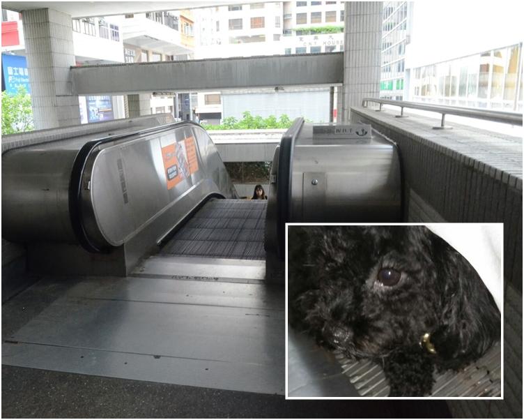 肇事電梯。小圖為受傷的狗女CoCo。