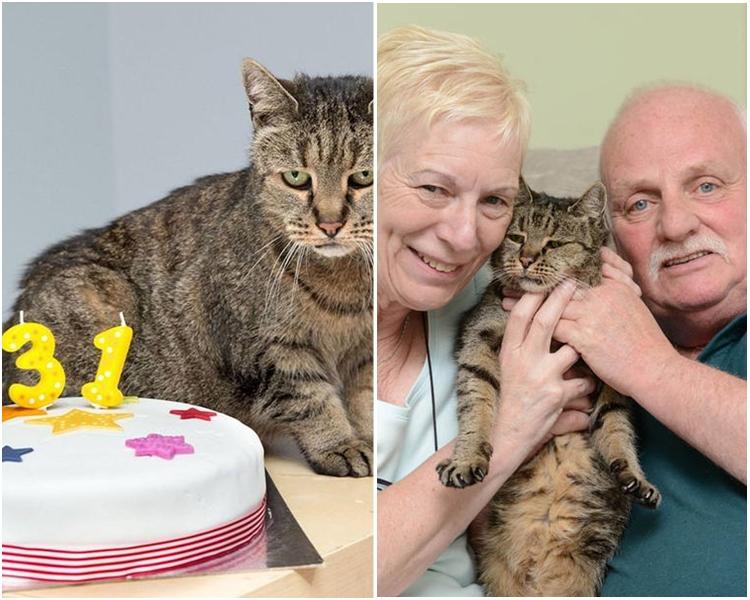 被認為是世上最老的貓、來自英國泰恩威爾郡的肉豆蔻,近日以32歲高齡逝世。(網上圖片)