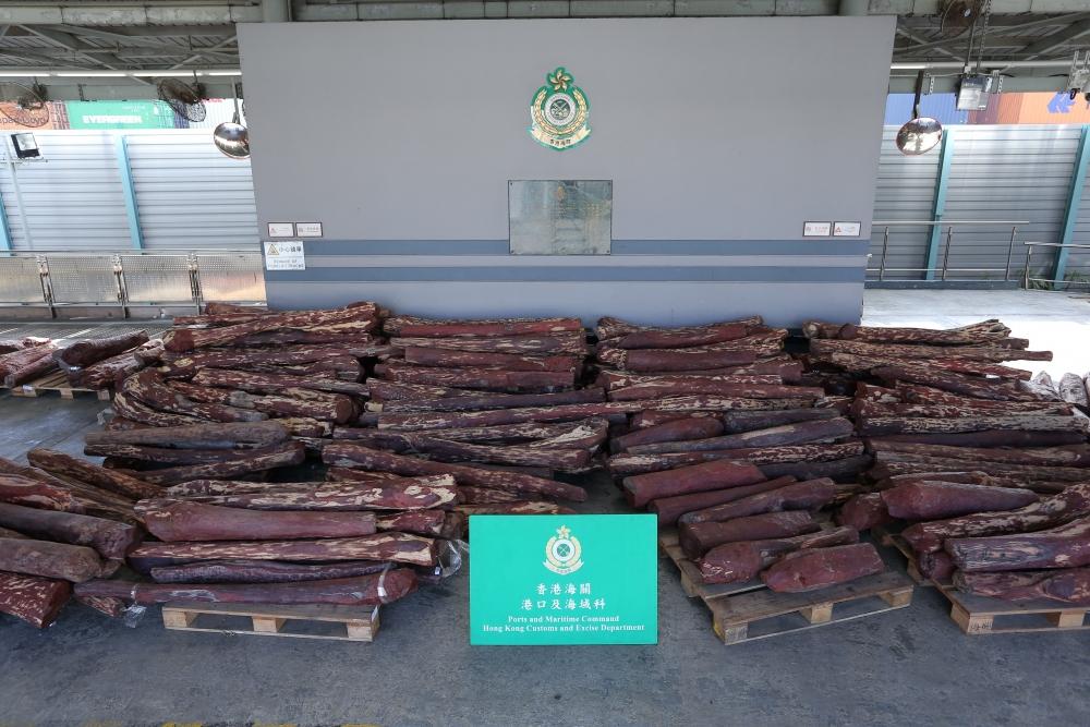 檢獲的檀香紫檀木材。海關圖片