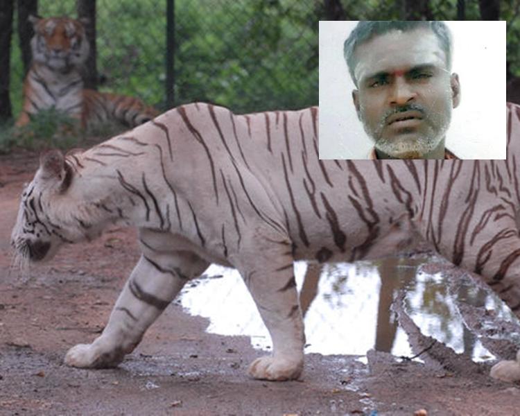 死者與白虎。網上圖片