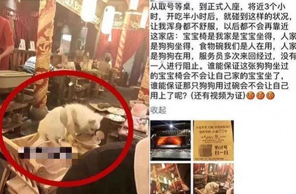 一間火鍋店有小狗舔著碗中的食物,但沒有侍應阻止。 網上圖片
