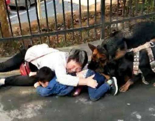 老人和小孩被兩隻狗咬著不放,並在在地上拖行。 網上圖片
