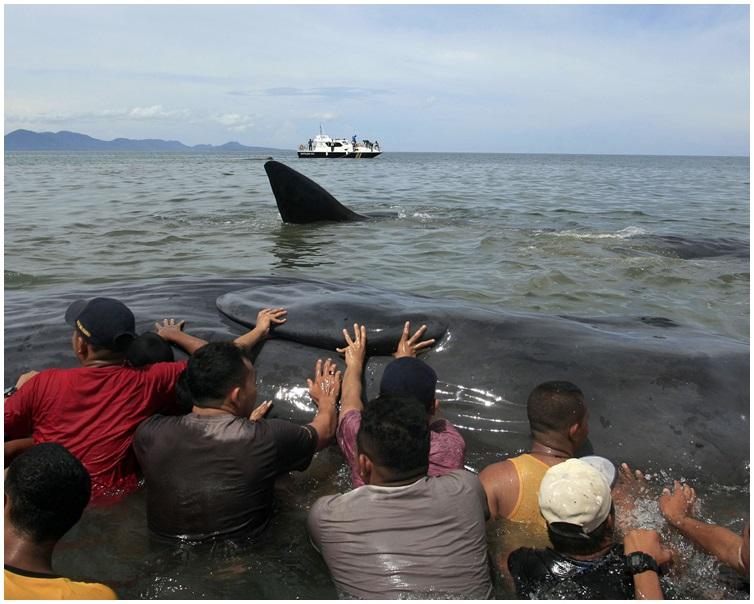 太多人湧往圍觀拍照,影響救援進展。 AP