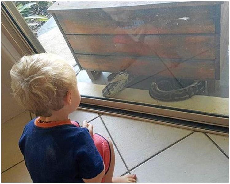 大蟒蛇一度撲向男童,幸好被玻璃阻隔。Megan Manley fb 圖片
