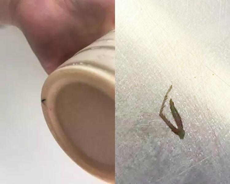 該連鎖店的其他分店已經曾傳出飲品內有蟑螂腳的事件。
