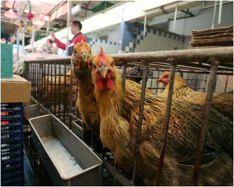 女童發病前曾接觸活家禽。