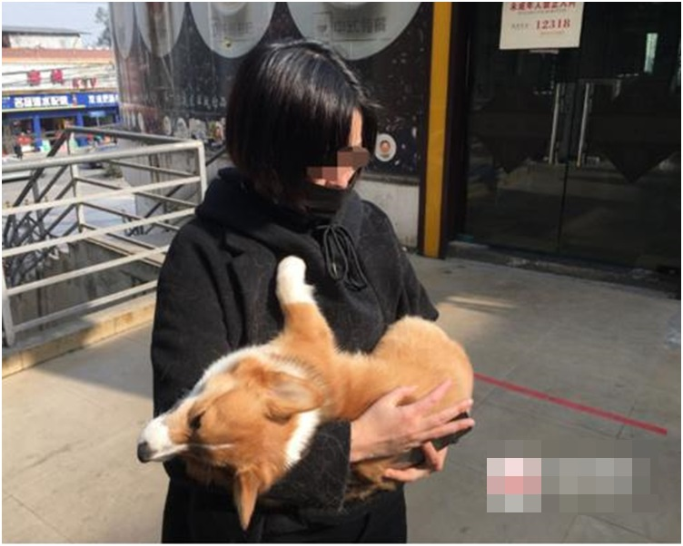 事件源於去年12月23日,狗主小吳發現家中的哥基犬萊恩走失。