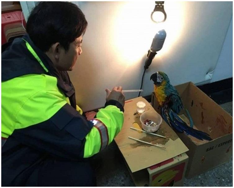 警員買來鎢絲燈泡呵護受傷鸚鵡度過寒夜。圖:高雄岡山警分局facebook