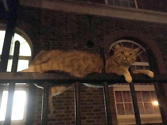 有途人發現一隻貓卡在一處住宅圍欄上,身體被圍欄鐵通刺穿兩個洞。 網圖