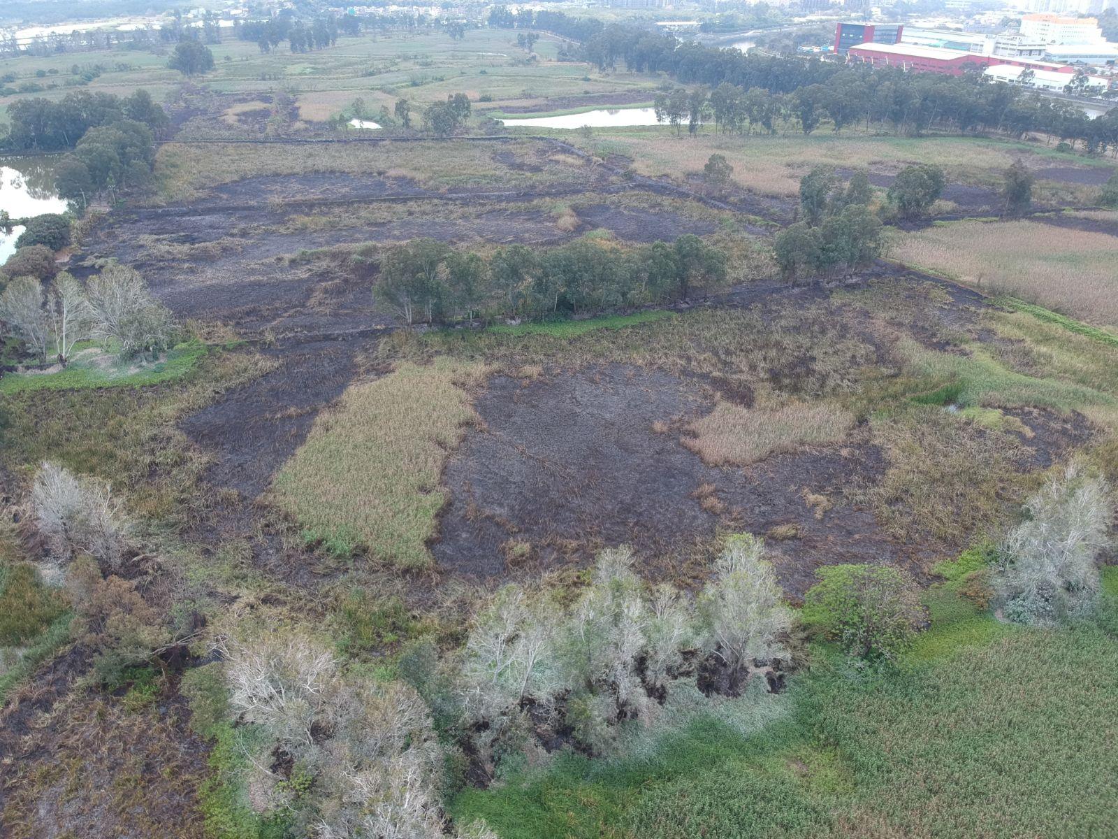 大批珍貴樹木被燒。讀者提供