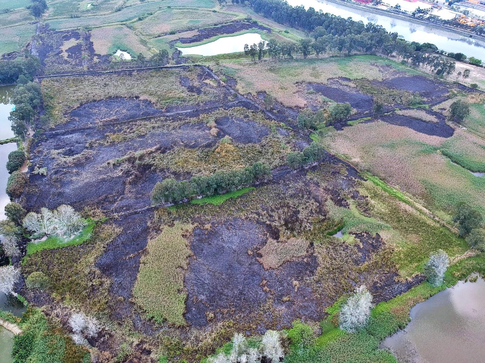 高空圖片顯示,大批樹木被焚燒。讀者提供