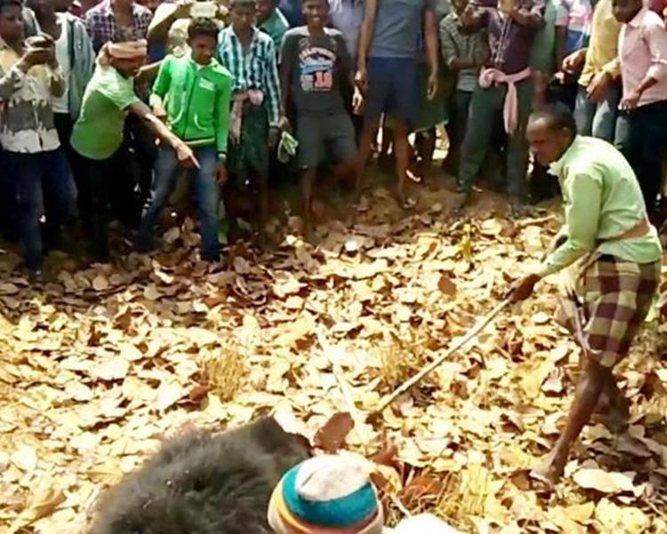 當地居民用棍棒和石頭打死咬人的黑熊。網圖