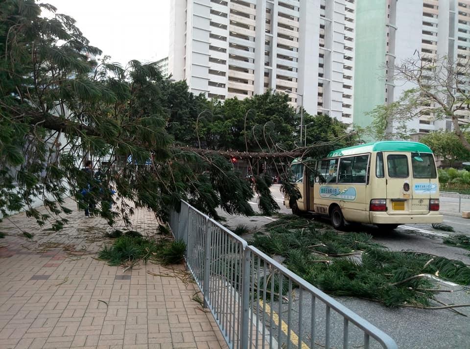 將軍澳塌樹壓毀小巴。facebook將軍澳