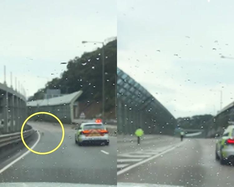 狗狗誤闖屯門公路,警方截車護航獲讚有愛。影片截圖
