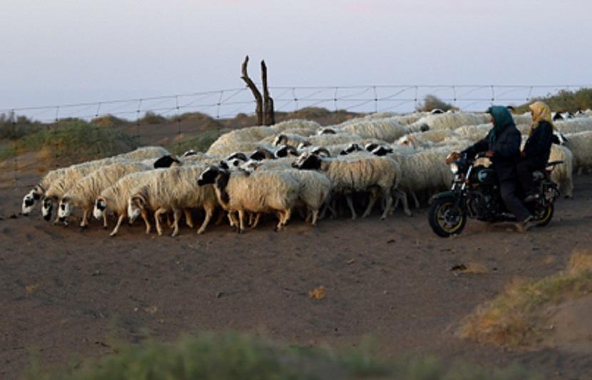 當局提醒不要剝食病死動物。新華社圖片