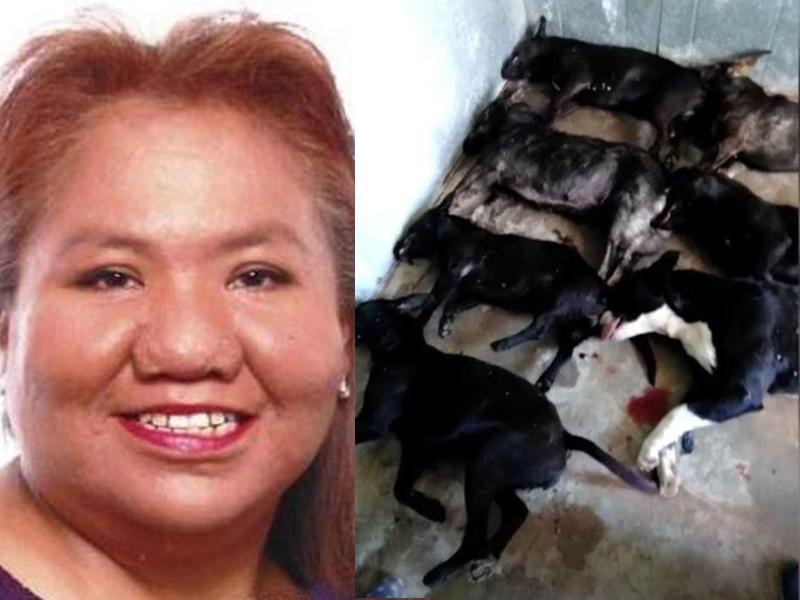 美國一名女子被鄰居家的7隻臘腸犬咬死,警方射殺了其中1隻狗,其餘6隻狗全部被實施了安樂死。(網圖)