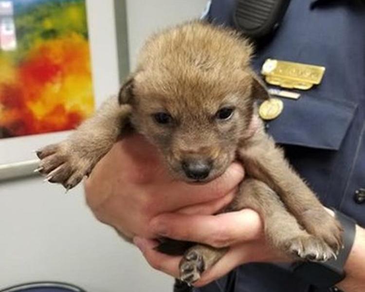 警員將牠送到當地野生動物中心。網圖