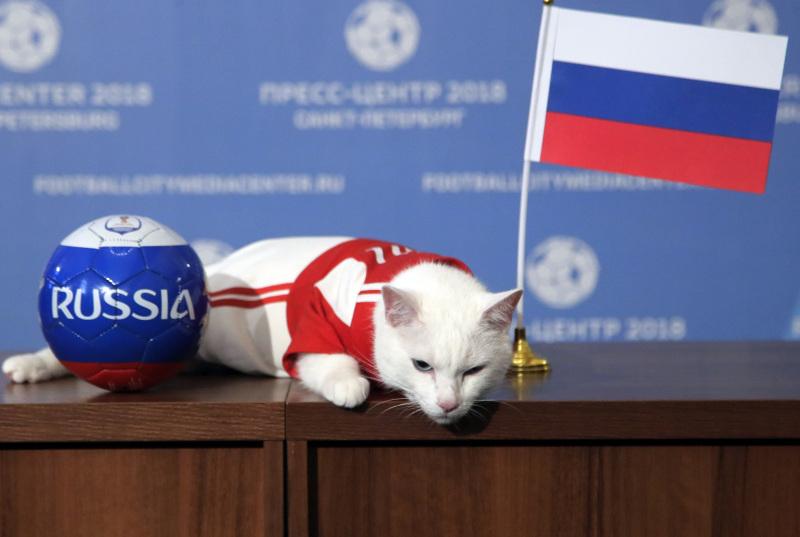 俄羅斯神算貓阿基里斯將會為世界盃賽果做預測。AP