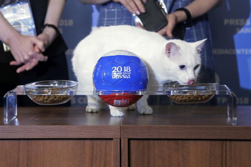 白貓阿基里斯預測開幕戰,俄羅斯將獲勝。AP