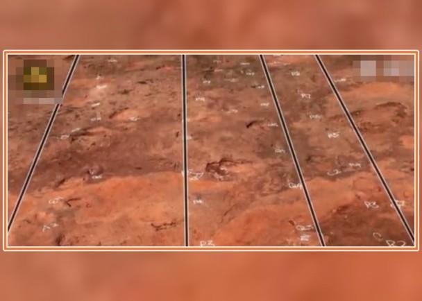 保持平行狀態的4道行小型恐爪類恐龍足迹。(網圖)