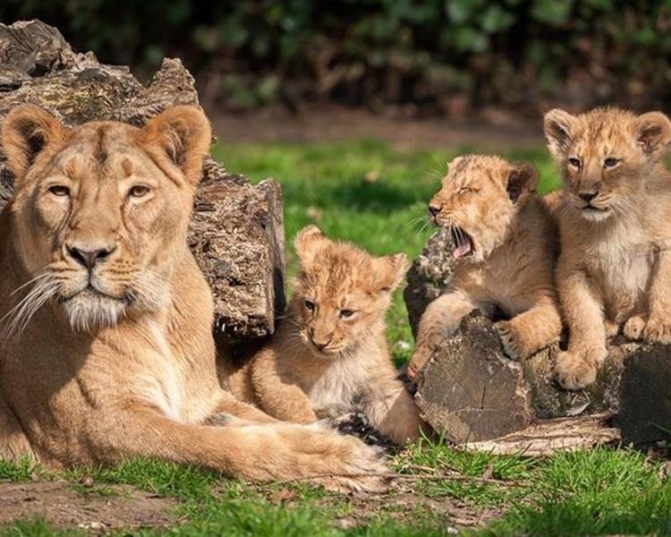 Planckendael Zoo圖片
