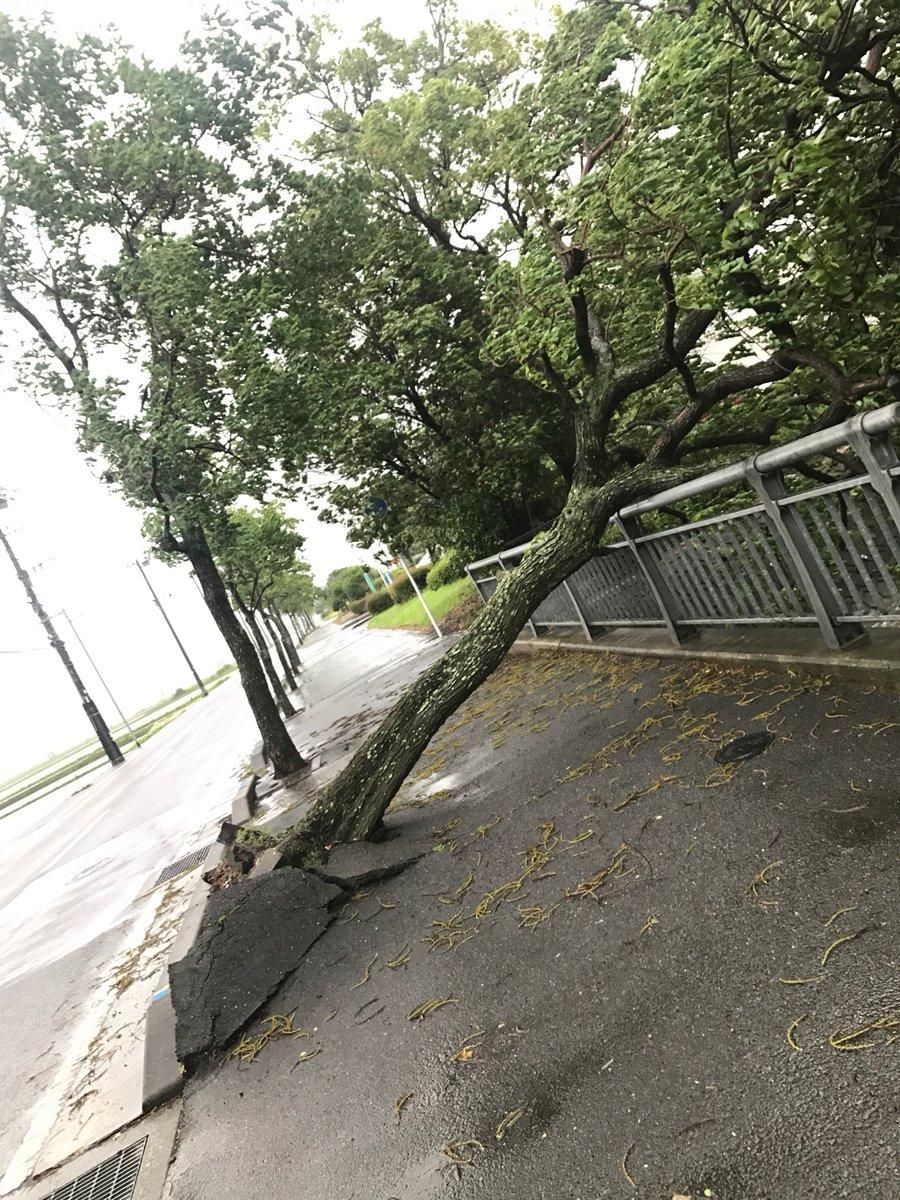 九州佐賀縣有樹木倒塌。網上圖片