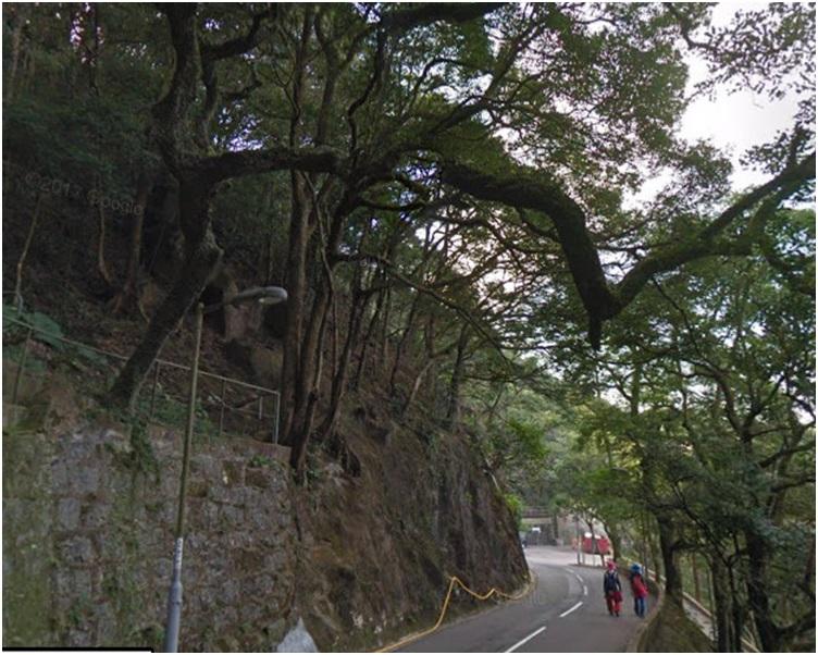 左邊山坡上一棵約10米高的大樹突然向下傾斜。網圖