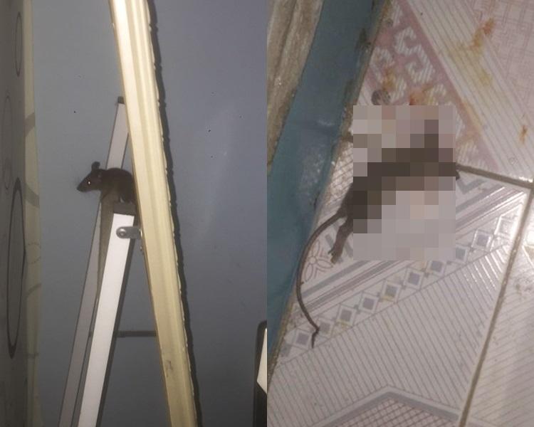 連登仔房中驚現老鼠。邊緣禪士圖片
