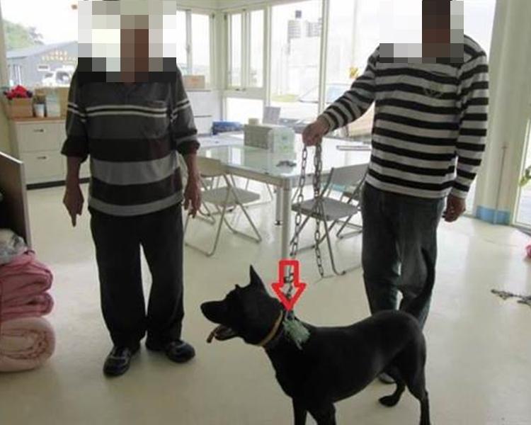 姓邱叔姪被揭發殘忍捕狗及虐狗。