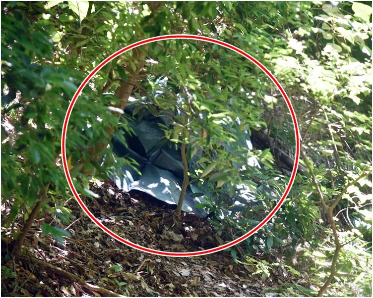 街坊報案,指發現一名女子昏迷倒卧山坡上。楊偉亨攝