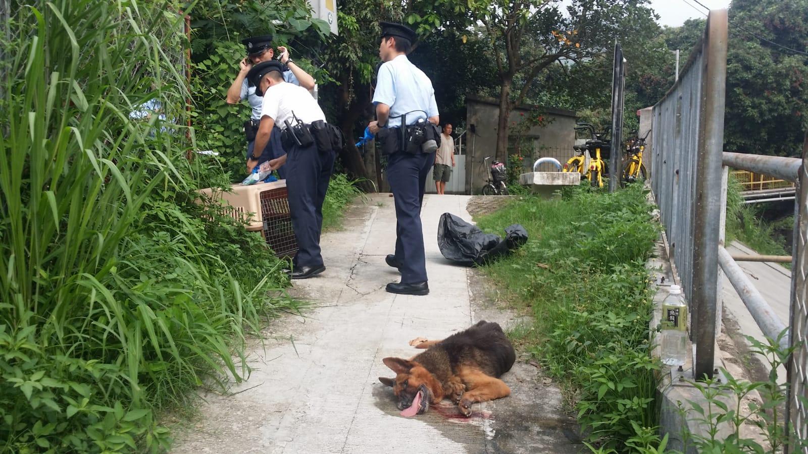 警方通知愛護動物協會人員到場處理,將受傷狗隻帶走。