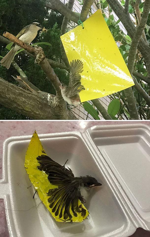 香港野生雀鳥保育關注組fb圖片