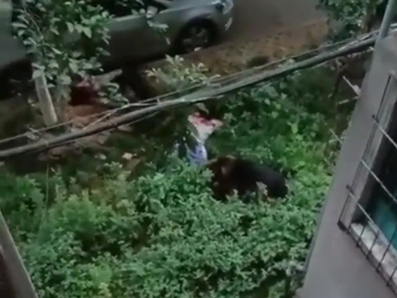 女子竟被拖到草叢內,嚇得不斷尖叫、大喊救命。(網圖)