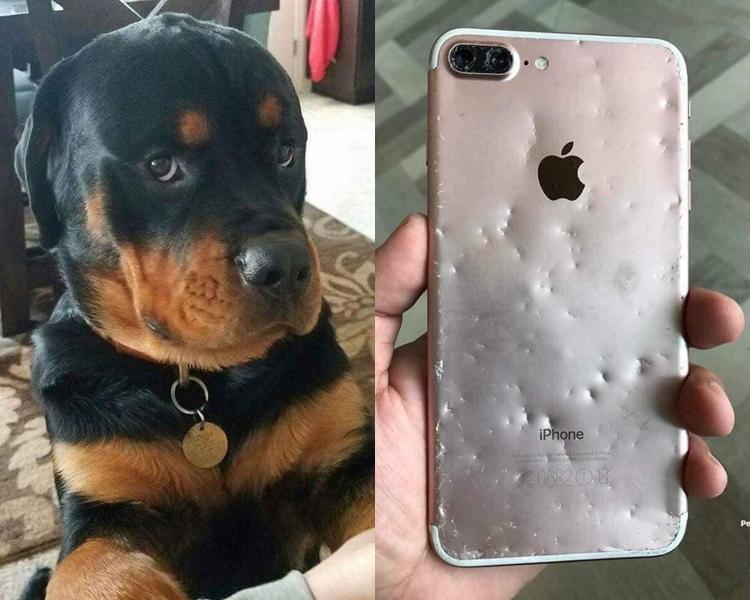 到底狗狗是否知錯呢?facebook