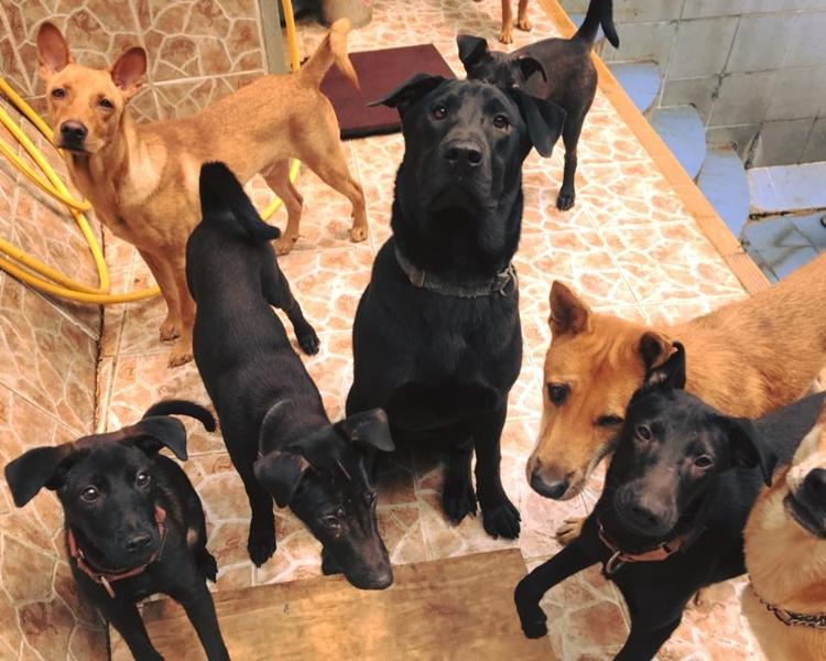 全部有需要的狗隻已找到暫托家庭。Hong Kong Dog Rescue (HKDR) fb圖片